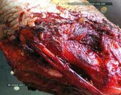 Посмертные повреждения зубами щенка