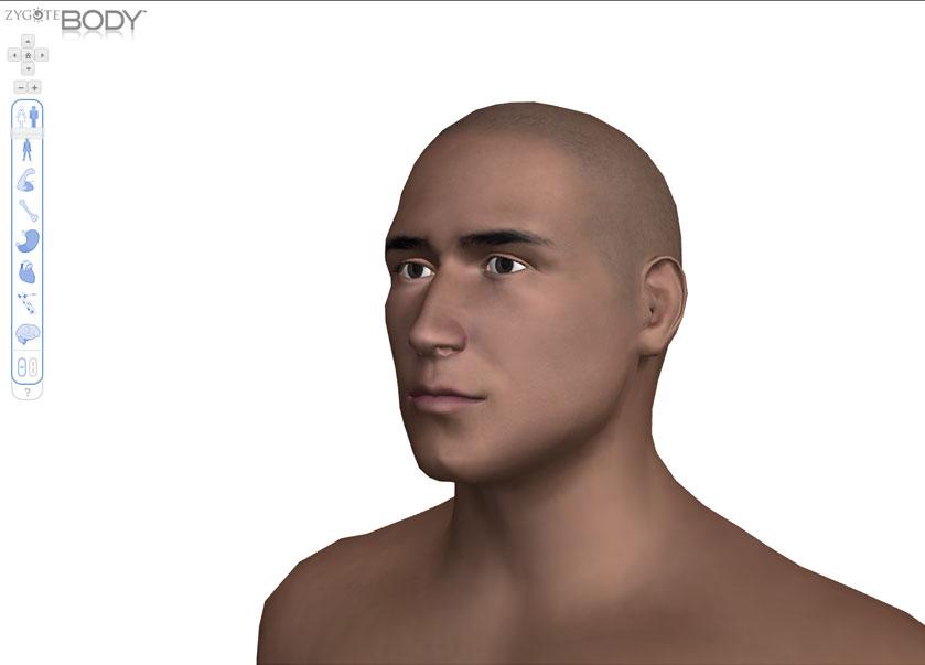 Интерактивный анатомический атлас zygotebody.com