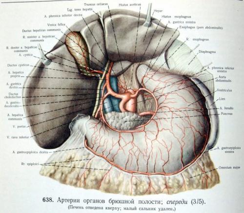 Прикрепленное изображение: hepar.JPG