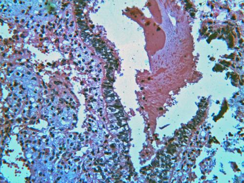 Прикрепленное изображение: scan-5.gif