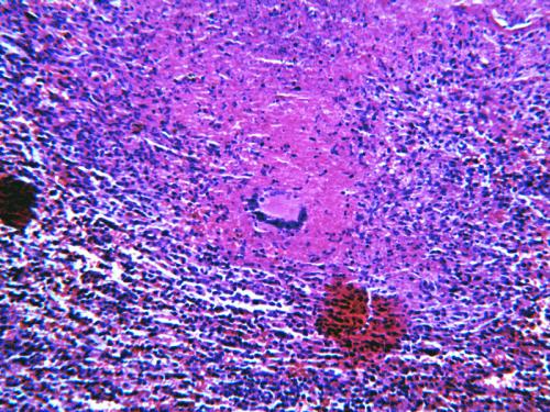 Прикрепленное изображение: scan-9.gif