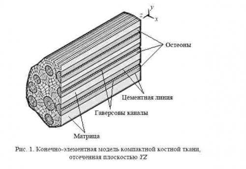 на строение остеона,