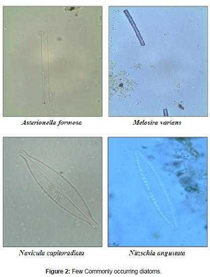 1 Diatom.jpg