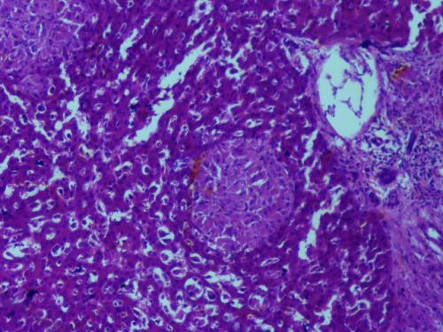 Прикрепленное изображение: Клетки 100.jpg